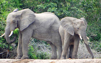 Sustainability in Tanzania Part 2 – Tembo Kijani EcoLodge