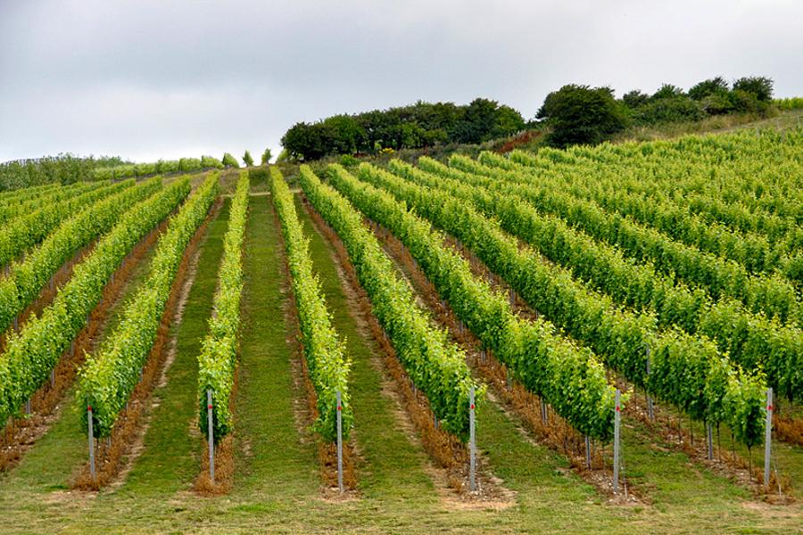 Rathfinny wine tour, East Sussex, UK