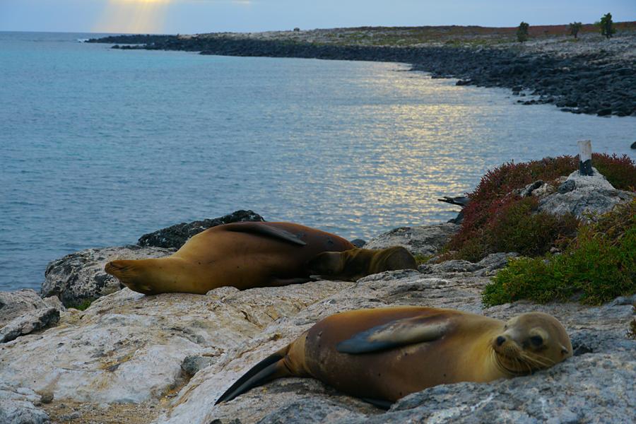 Galapagos sealions. Photo by Johanna Read TravelEater.net