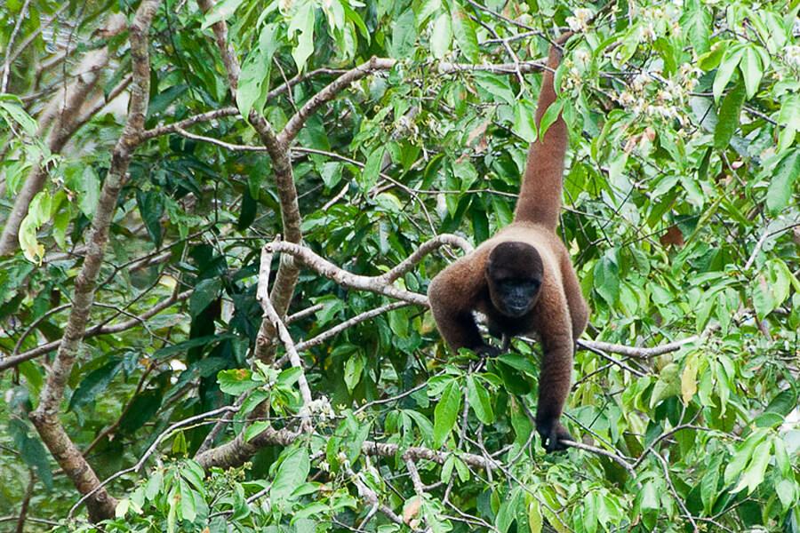 Treehouse Lodge, Amazon Jungle, Peru