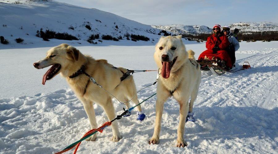 Husky dog sleigh ride in Norway