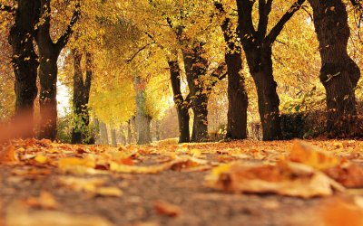 Top UK road trips to take this autumn